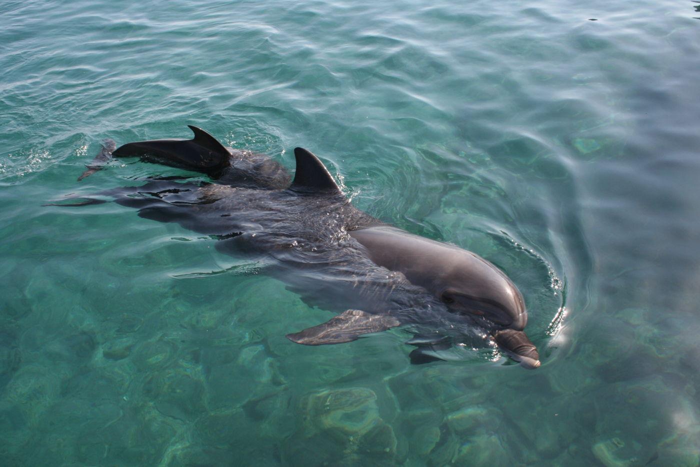 marco island wildlife
