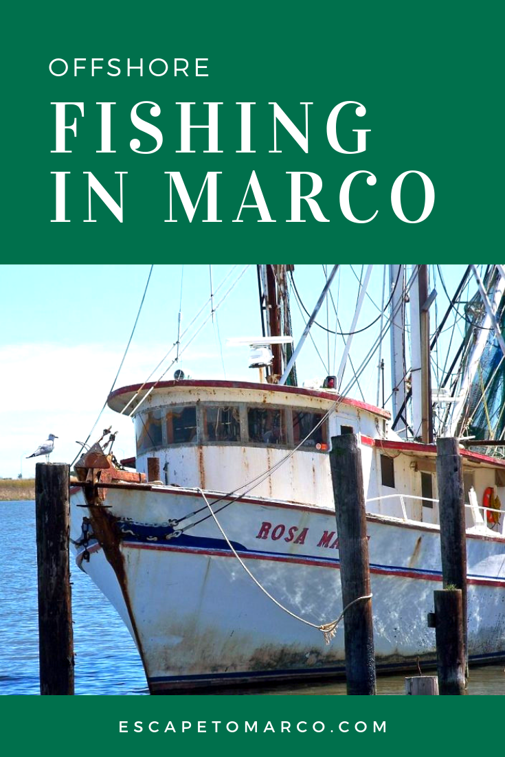 marco island offshore fishing near the 10,000 islands