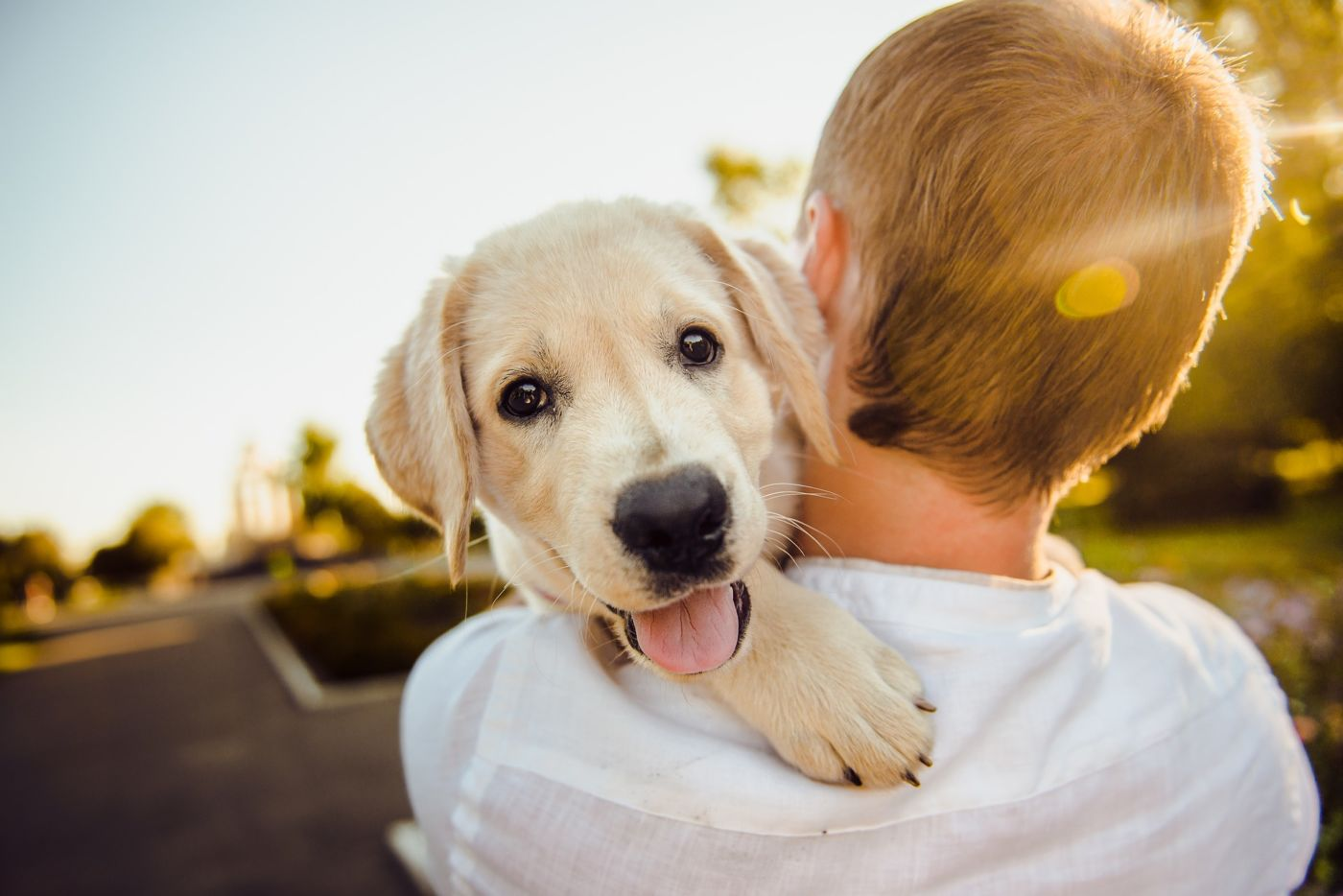 Take your dog to Canine Cove dog park Marco Island    Marco Island    Clausen Properties