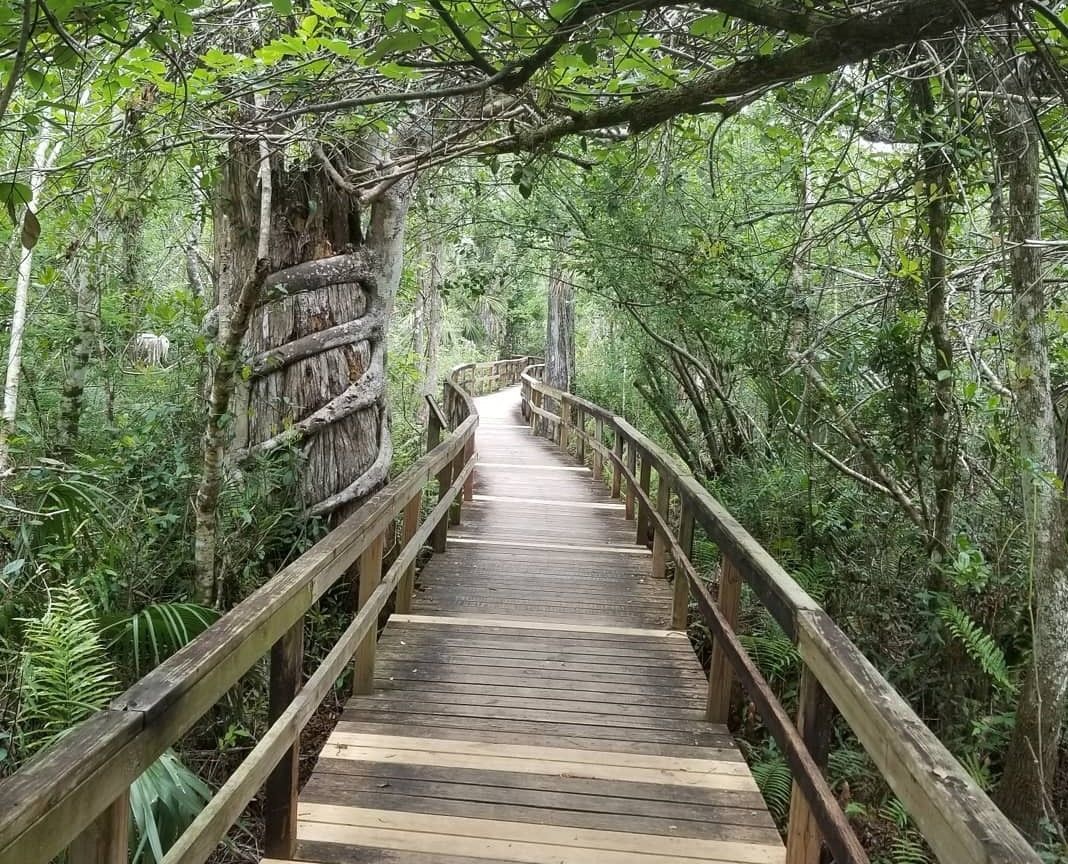 Fakahatchee Strand Preserve State Park