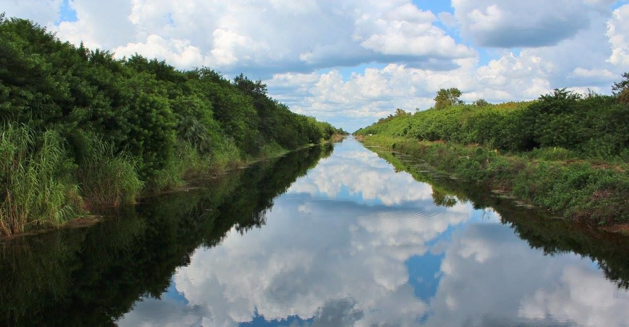 View of the Picayune Strand State Forest from the water